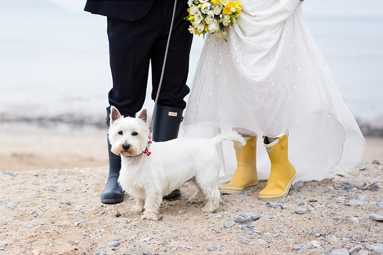 Quirky image of a couples feet with hunter wellingtons holding a bright yellow wedding bouquet. Their westie dog standing infront of them looking at camera